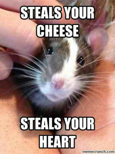 Steals Your Cheese Steals Rat Meme