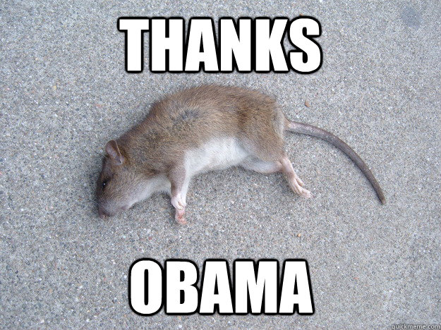 Thanks Obama Rat Meme