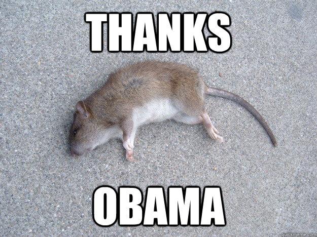 Thanks Obama Rat Meme