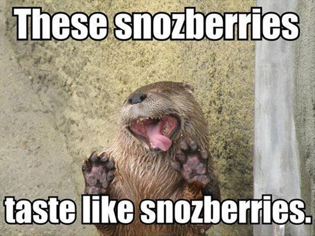 These Snozberries Taste Like Mongoose Meme