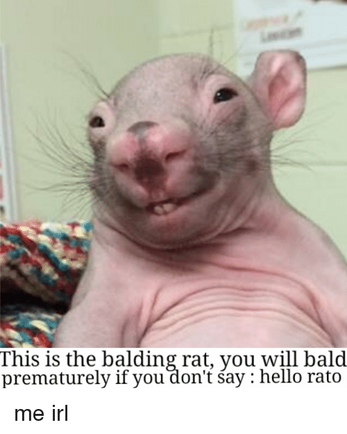This Is The Balding Rat Meme
