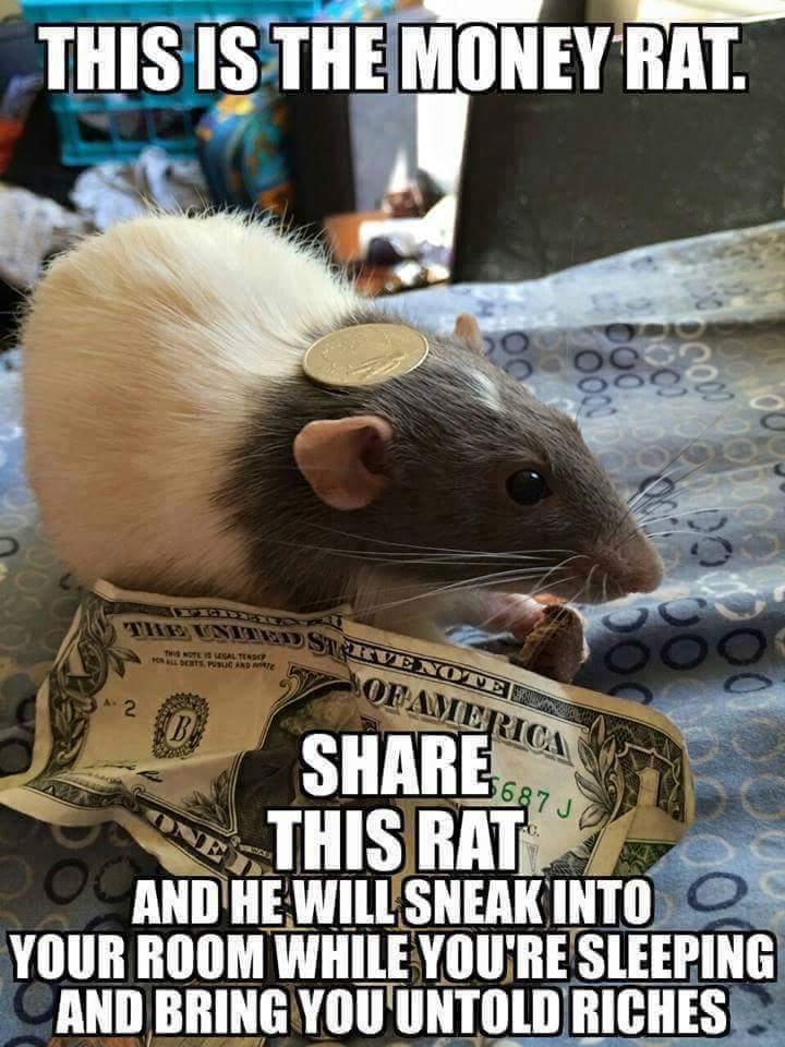 This Is The Money Rat Rat Meme