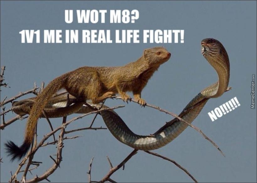 U Wot M8 1V1 Mongoose Meme