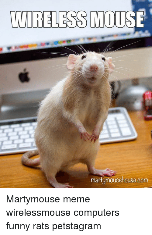 Wireless Mouse Rat Meme