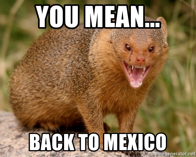 You Mean Back To Mongoose Meme