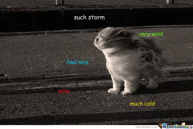 Such Storm Feel Nice Storm Meme