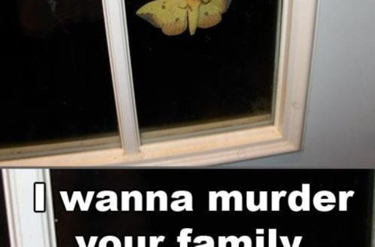 I Wanna Murder Your Family Butterfly Meme