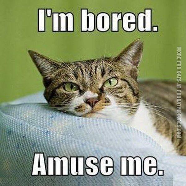 I'm Bored Amuse Me Bored Meme