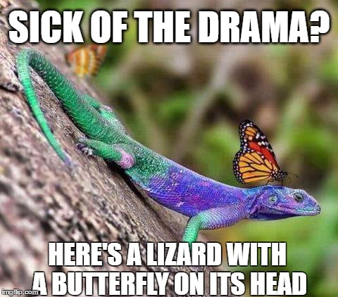 Sick Of The Drama Butterfly Meme