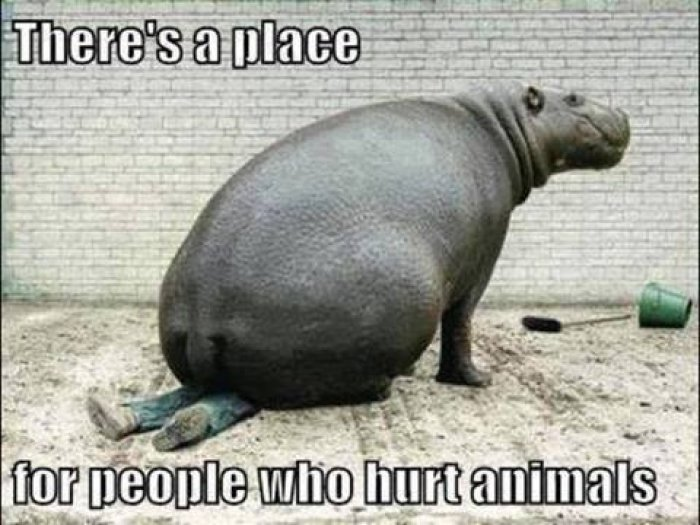 There's A Place For Animals Meme