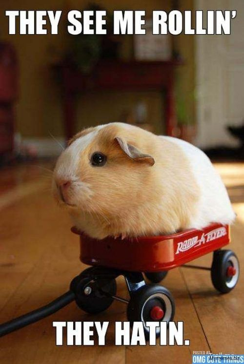 They See Me Rollin Animals Meme