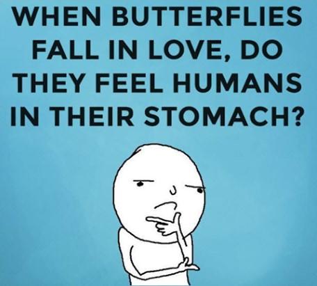 When Butterflies Fall In Love Butterfly Meme