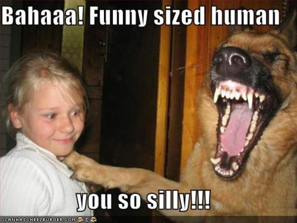 Bahaaa! Funny Sized Human Are You Crazy Meme