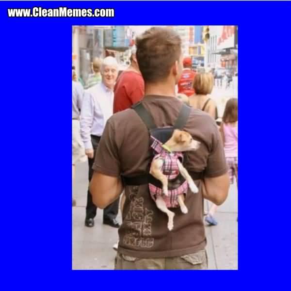 Dog In Back Pack Backpack Meme