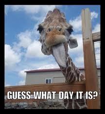 Guess What Day It April The Giraffe Meme
