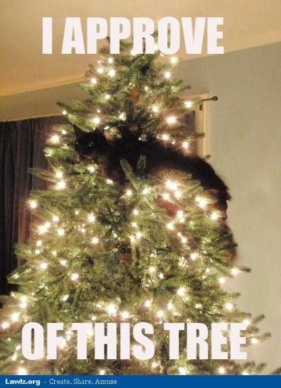 19 Very Funny Christmas Tree Meme That Make You Laugh ...