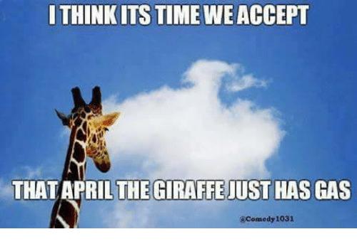 I Think Its Time April The Giraffe Meme