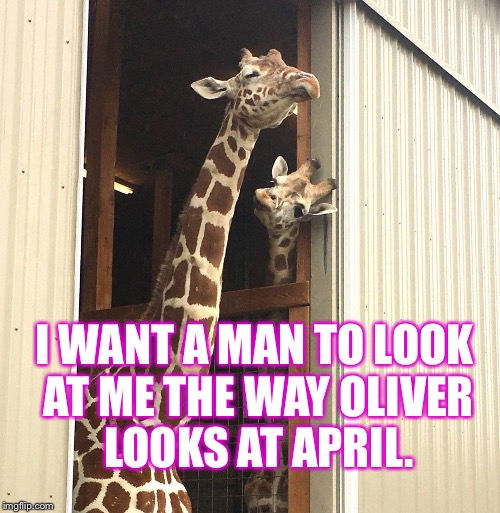 I Want A Man April The Giraffe Meme